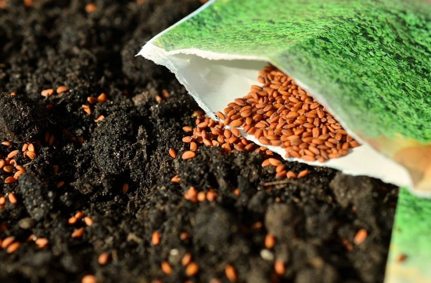 Coronavirus is not a barrier to sowing Mizez